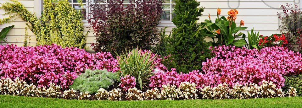 flower beds  city wide landscape management, Beautiful flower